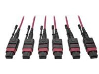 Tripp Lite 24-Fiber MTP MPO OM4 Base-8 MMF Trunk Cable 40/100GbE 3X, 23M - network cable - 23 m - magenta